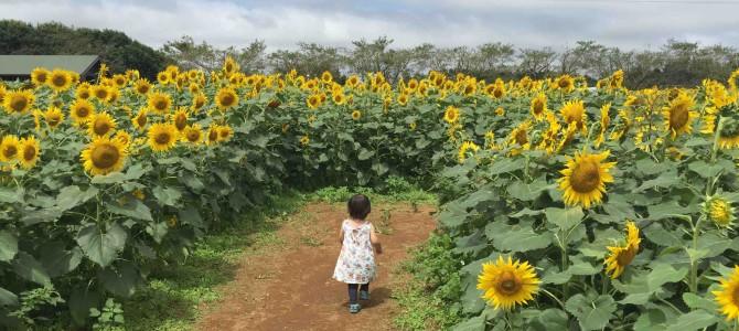 「成田ゆめ牧場」に行ってみたら、小さい子連れにぴったりで、おいしかった@千葉県成田市