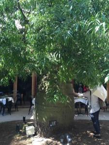 バオバブの木のパワーをもらおうと、ひっきりなしに充電する人たち