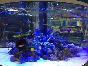 美ら海水族館からは本物の水槽がやってきてました。束の間の癒しを堪能。