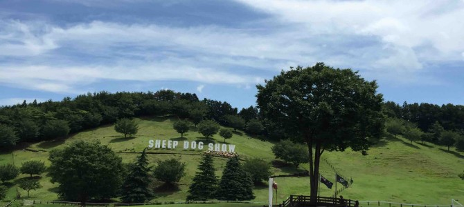 行楽シーズンにぴったり。働きモノの犬と羊が圧巻!国内最大規模のシープドックショー&ほのぼの「うさんぽ」の休日@伊香保グリーン牧場