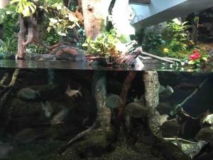 アマゾン川の展示では「隠しカボチャ」があちこちに!