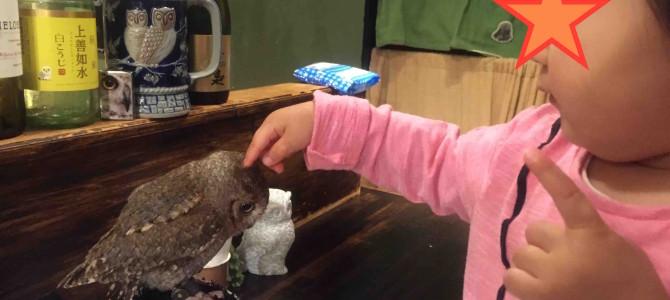 意外にかわいい猛禽類。いま話題のふくろうカフェに2歳児と一緒に行ってみた@東京・高田馬場