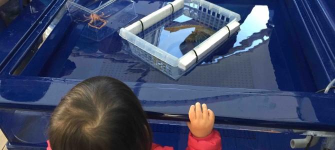 水族館内七福神巡り&深海魚がさわれる!サンシャイン水族館がまたまた攻めている@東京・池袋