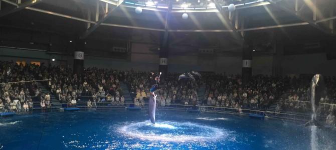 いまどきの水族館ってすごい!近未来水族館&イルカショー@東京・エプソンアクアパーク品川