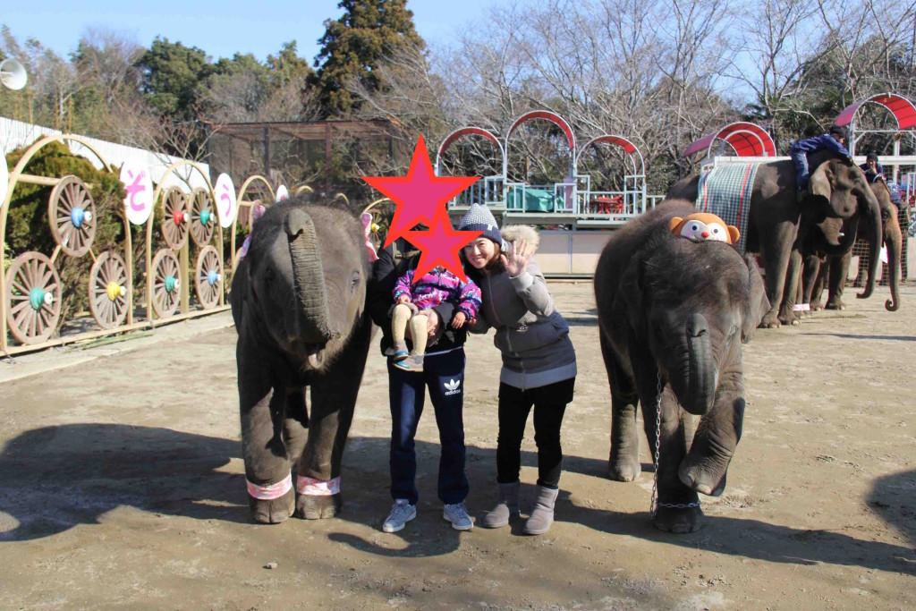 1歳&2歳の赤ちゃんゾウと一緒に記念撮影3000円