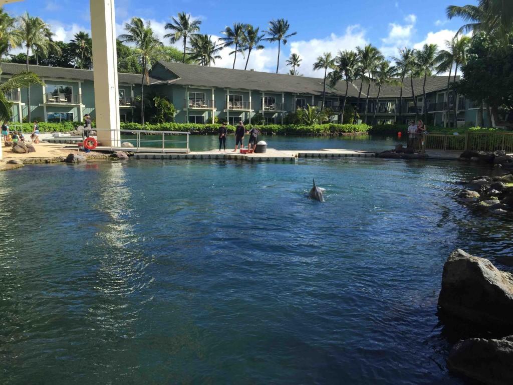 ホテル内には大きなラグーン。中ではイルカが6頭飼育されている。