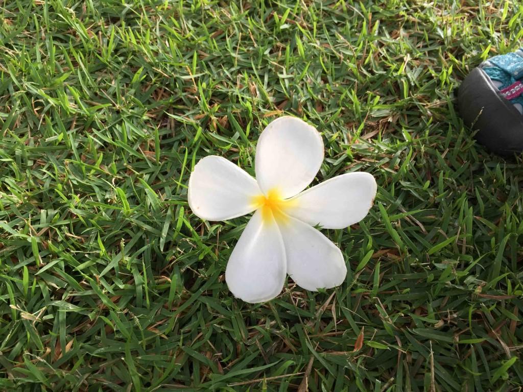 ふと足元を見れば、お花が落ちてるし