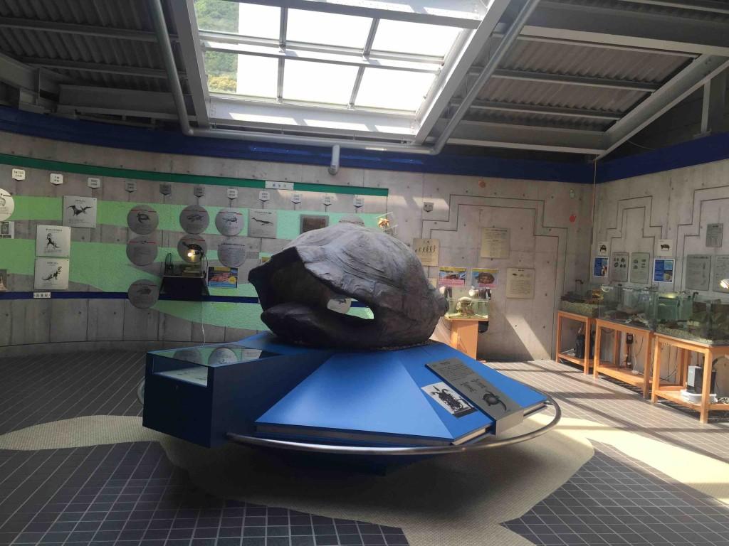 入るとカメの展示。博物館だから、ちゃんと解説や歴史的なものもあります。