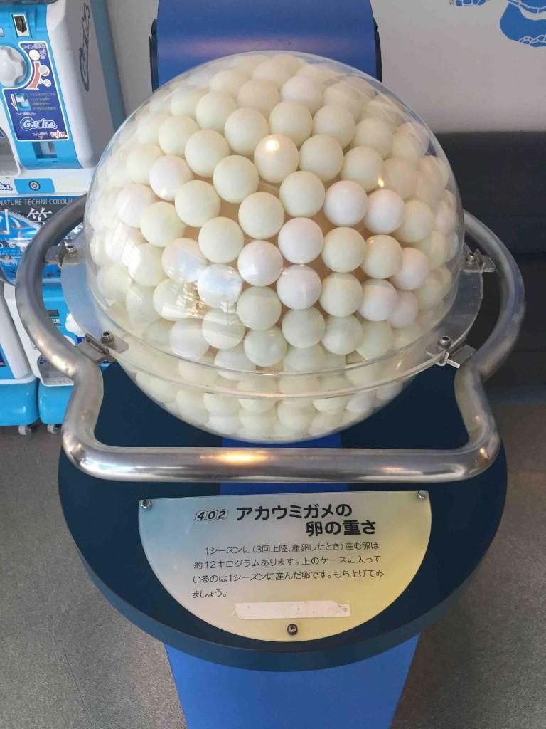 ウミガメの卵のリアルな大きさや量も一目でわかる。小学生とかが見学にくるのがいいんだろうな、と漠然と思う。