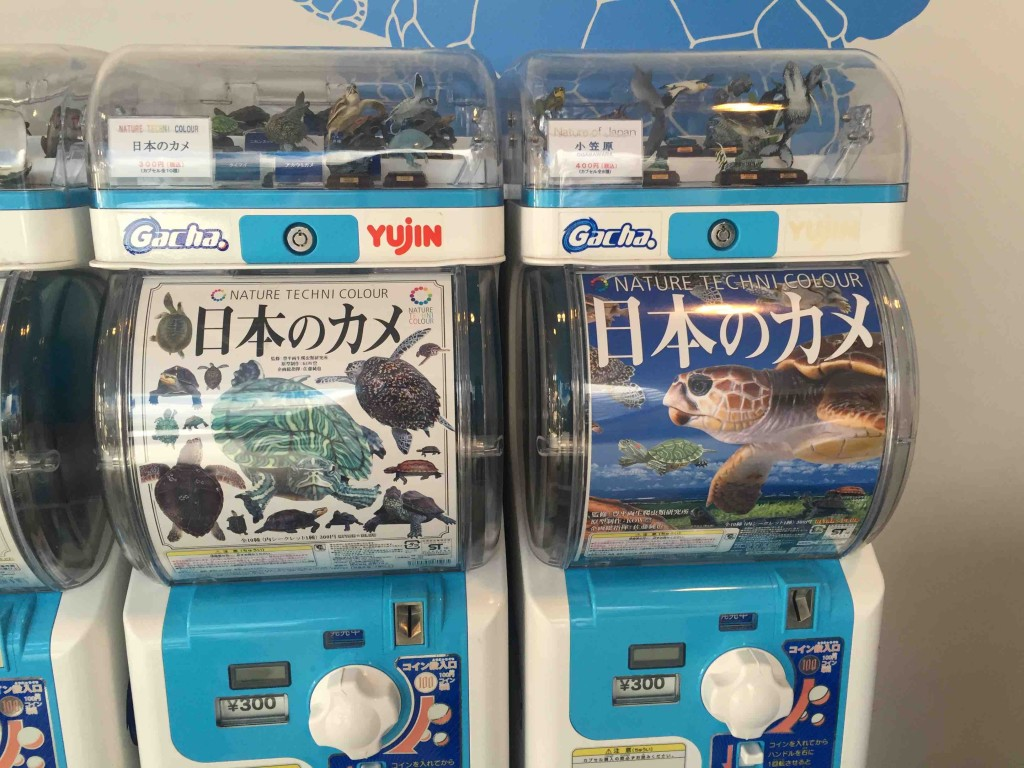 そして、ガチャガチャも見事にカメだらけ(笑)。うちは「日本のカメ」シリーズでミドリガメを引き当てたのですが、名前はなんと「ミシシッピ・・・」原産国はアメリカだった・・・。