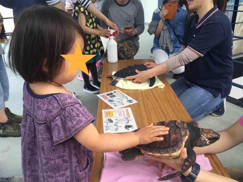 イベントものも充実。私たちが行った時は、ウミガメの赤ちゃんに触ることができました
