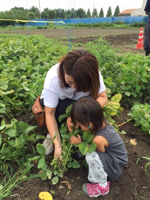 うちの娘は枝豆が大好きなので、「茶豆」収穫に挑戦!2歳児にはちょっと難しいので、一緒に作業。