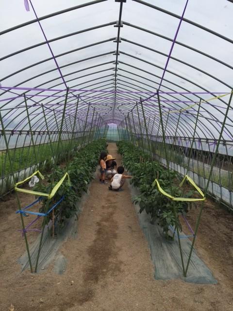 他にも、季節によって様々な野菜が収穫可能。トマト1kg400円、なす3本100円とどれも格安。